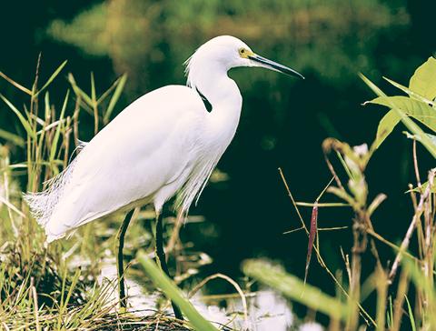oiseau lac