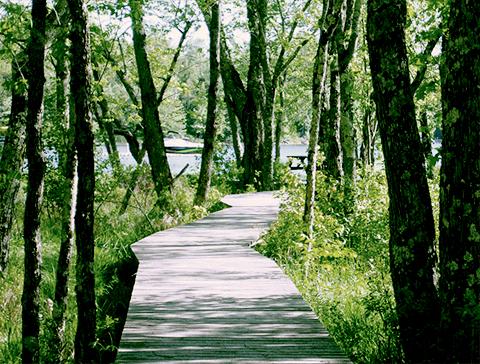 sentier bois lac